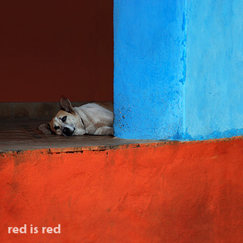 Galeria - Red is Red